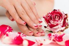 Mãos fêmeas com verniz de prego perto da Rosa Fotos de Stock Royalty Free