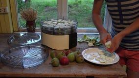 Mãos fêmeas do camponês que descascam e para cortar peras maduras com faca Secagem do fruto 4K video estoque