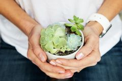 Mãos fêmeas que guardam o potenciômetro com plantas suculentos imagem de stock royalty free