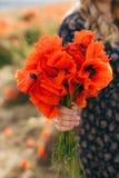 Mãos fêmeas que guardam um ramalhete da papoila vermelha foto de stock royalty free