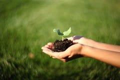 Mãos humanas que guardam o conceito novo da vida da planta pequena verde com swirly efeito maravilhoso do bokeh pela lente de Pet fotografia de stock