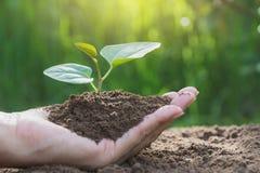 Mãos humanas que guardam o conceito pequeno verde da vida vegetal Ecologia concentrada imagem de stock