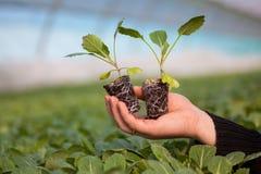Mãos humanas que guardam a planta nova com solo sobre o fundo borrado da natureza A plântula do CSR do dia de ambiente de mundo d Fotografia de Stock