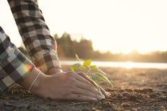 Mãos humanas que plantam pouca planta verde em terra seca rachada foto de stock