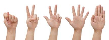 Mãos isoladas Fotos de Stock