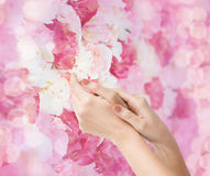 Mãos macias fêmeas da pele Imagem de Stock