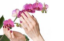 Mãos Manicured que tocam na orquídea Fotografia de Stock Royalty Free