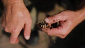 Mãos masculinas do pescador que preparam o sem-fim de pesca no fim do gancho acima video estoque