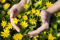 Mãos no fundo da natureza Foto de Stock