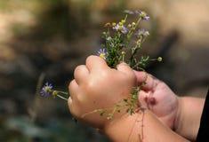 Mãos pequenas fotografia de stock royalty free