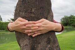 Mãos que abraçam em torno do tronco de uma árvore com amor foto de stock royalty free