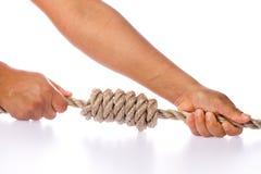 Mãos que apertam o nó no fundo branco Foto de Stock