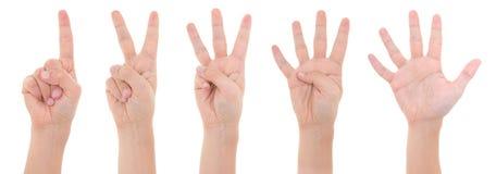 Mãos que contam um a cinco isolados no fundo branco imagem de stock