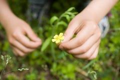 Mãos que escolhem Wildflowers fotografia de stock royalty free