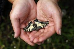 Mãos que guardam a borboleta Foto de Stock