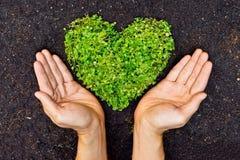 Mãos que guardam coração verde a árvore dada forma Fotografia de Stock Royalty Free