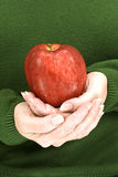 Mãos que guardam delicadamente um vermelho - Apple delicioso Foto de Stock