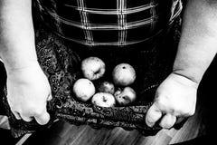 Mãos que guardam maçãs podres no regaço Foto de Stock