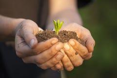 Mãos que guardam o seedleng imagens de stock royalty free