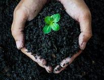 Mãos que guardam o solo com planta nova Fotos de Stock Royalty Free
