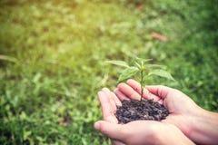 Mãos que guardam o solo e a árvore pequena para incandescer com grama verde imagens de stock