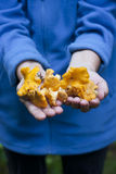 Mãos que guardam para fora canterelles amarelos Imagens de Stock Royalty Free