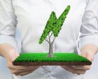 Mãos que guardam a telha do relvado com a árvore das folhas dadas forma relâmpago imagem de stock royalty free