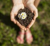 Mãos que guardam um grupo com flores Foto de Stock