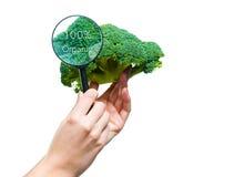 Mãos que guardam uma lupa sobre uns brócolis Imagem de Stock Royalty Free