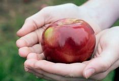 Mãos que guardam uma maçã de Macintosh Fotos de Stock Royalty Free