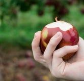 Mãos que guardam uma maçã de Macintosh Foto de Stock Royalty Free