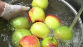 Mãos que lavam maçãs frescas vídeos de arquivo