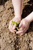 Mãos que plantam uma árvore Imagens de Stock