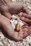Mãos que prendem escudos do mar Imagem de Stock Royalty Free