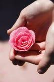 Mãos que prendem a flor cor-de-rosa imagem de stock