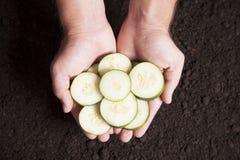 Mãos que prendem pepinos cortados imagem de stock royalty free