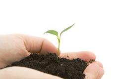 Mãos que prendem a planta sprouting Imagem de Stock Royalty Free