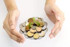 Mãos que protegem a planta do bebê em moedas do dinheiro Imagem de Stock Royalty Free