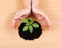 Mãos que protegem uma planta Imagens de Stock