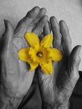 Mãos velhas Foto de Stock Royalty Free