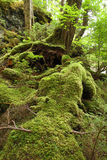 Mäßiger Regenwald Stockfoto