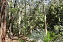 Mäßiger Regenwaldweg Lizenzfreie Stockbilder