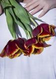 Mężczyzna w biel ubraniach trwanich i dziewczyna ściska szyję mężczyzna trzyma czerwień z kolor żółty granicy tulipanami z powrot obrazy stock