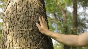 Mężczyzny ręka dotyka drzewa w górę, barkentyna drzewo jest w górę zdjęcie wideo