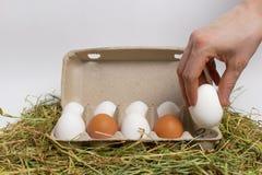 Męska ręka bierze jajko z pudełka jajka isolate zdjęcie stock