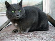 Mächtige Katze Lizenzfreies Stockbild