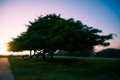 Mächtiger Baum Stockfotos
