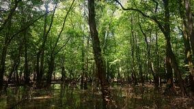 Mächtiges Mississippi-Stauwasser Stockfotos