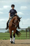 Mädchen auf Pferd Stockfotos