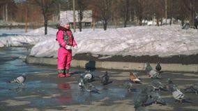 Mädchen-aufpassende Tauben um sie im Vorfrühling stock footage